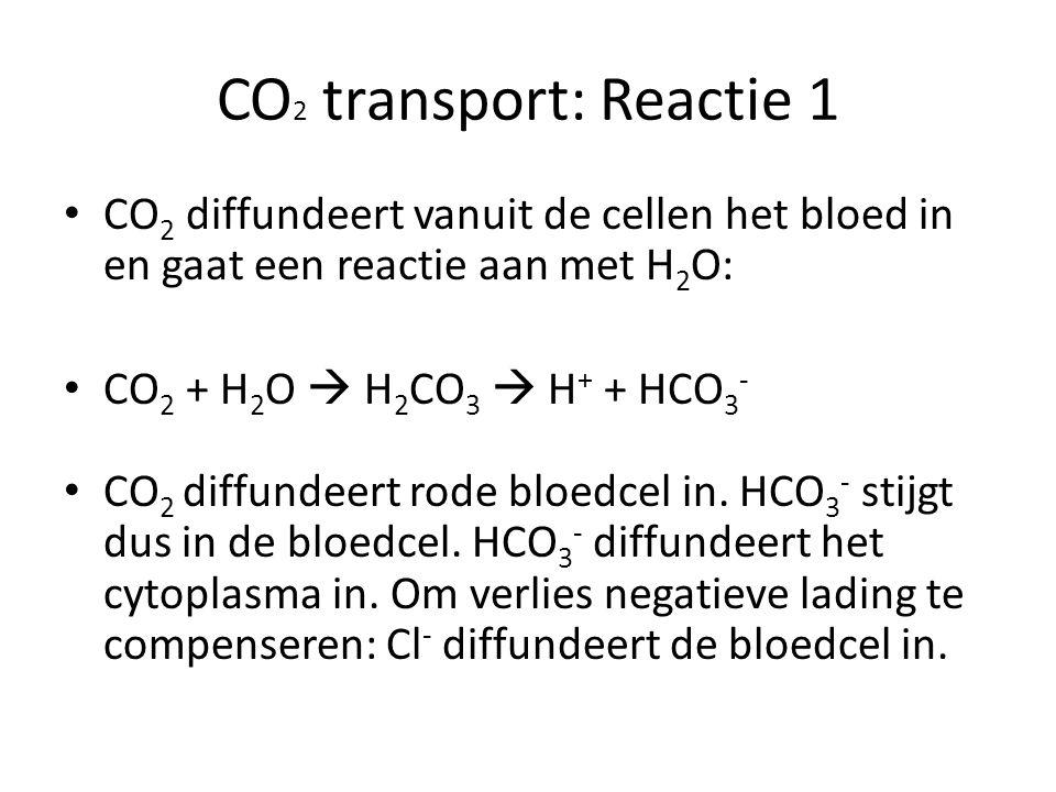 CO 2 transport: Reactie 1 CO 2 diffundeert vanuit de cellen het bloed in en gaat een reactie aan met H 2 O: CO 2 + H 2 O  H 2 CO 3  H + + HCO 3 - CO