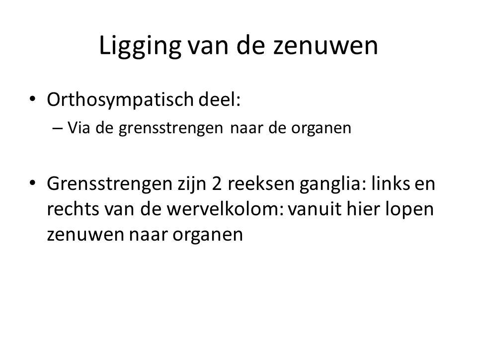 Ligging van de zenuwen Orthosympatisch deel: – Via de grensstrengen naar de organen Grensstrengen zijn 2 reeksen ganglia: links en rechts van de werve