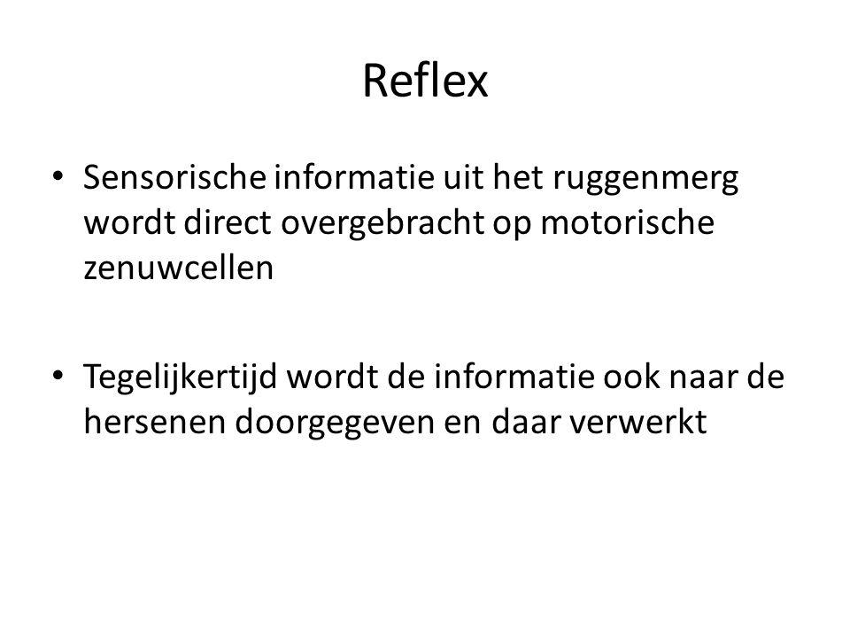 Reflex Sensorische informatie uit het ruggenmerg wordt direct overgebracht op motorische zenuwcellen Tegelijkertijd wordt de informatie ook naar de he