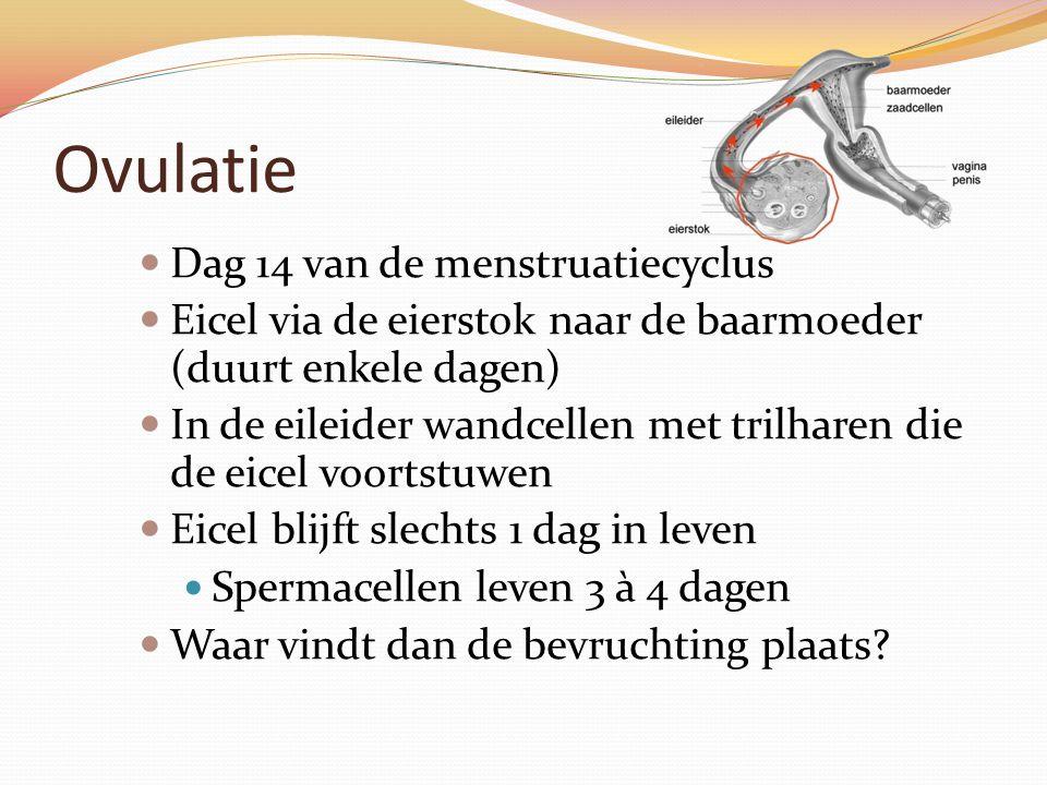 Ovulatie Dag 14 van de menstruatiecyclus Eicel via de eierstok naar de baarmoeder (duurt enkele dagen) In de eileider wandcellen met trilharen die de