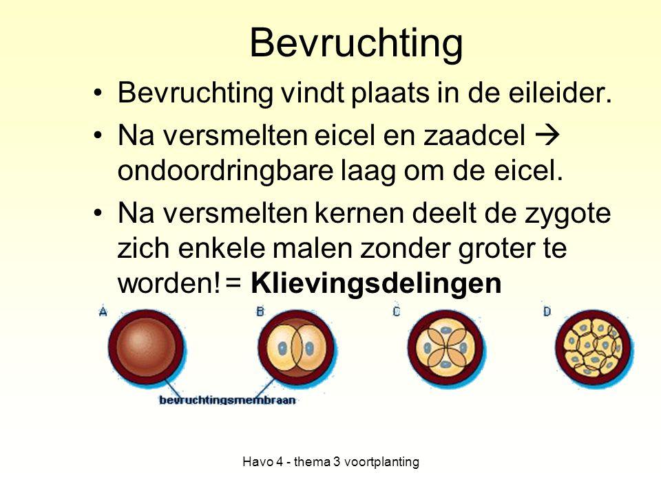 Havo 4 - thema 3 voortplanting Bevruchting Bevruchting vindt plaats in de eileider. Na versmelten eicel en zaadcel  ondoordringbare laag om de eicel.