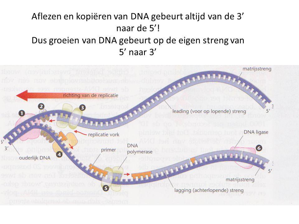 Aflezen en kopiëren van DNA gebeurt altijd van de 3' naar de 5'! Dus groeien van DNA gebeurt op de eigen streng van 5' naar 3'