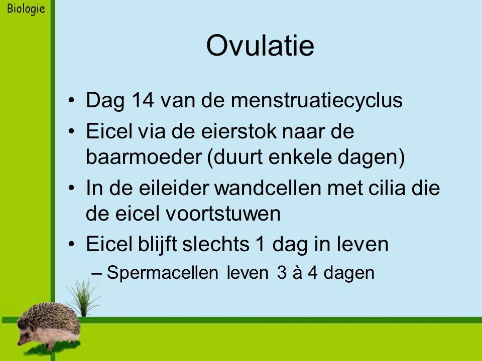 Ovulatie Dag 14 van de menstruatiecyclus Eicel via de eierstok naar de baarmoeder (duurt enkele dagen) In de eileider wandcellen met cilia die de eicel voortstuwen Eicel blijft slechts 1 dag in leven –Spermacellen leven 3 à 4 dagen