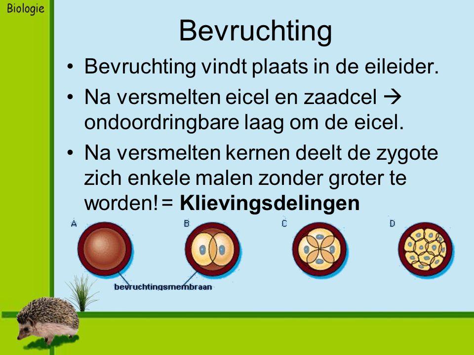 Bevruchting Bevruchting vindt plaats in de eileider.