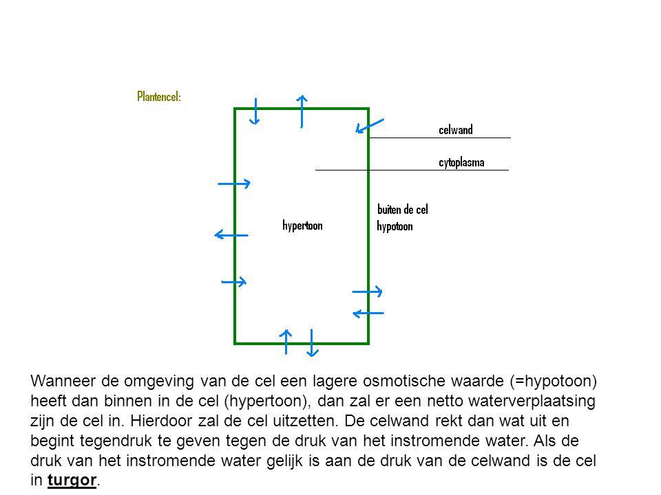 Wanneer de omgeving van de cel een lagere osmotische waarde (=hypotoon) heeft dan binnen in de cel (hypertoon), dan zal er een netto waterverplaatsing