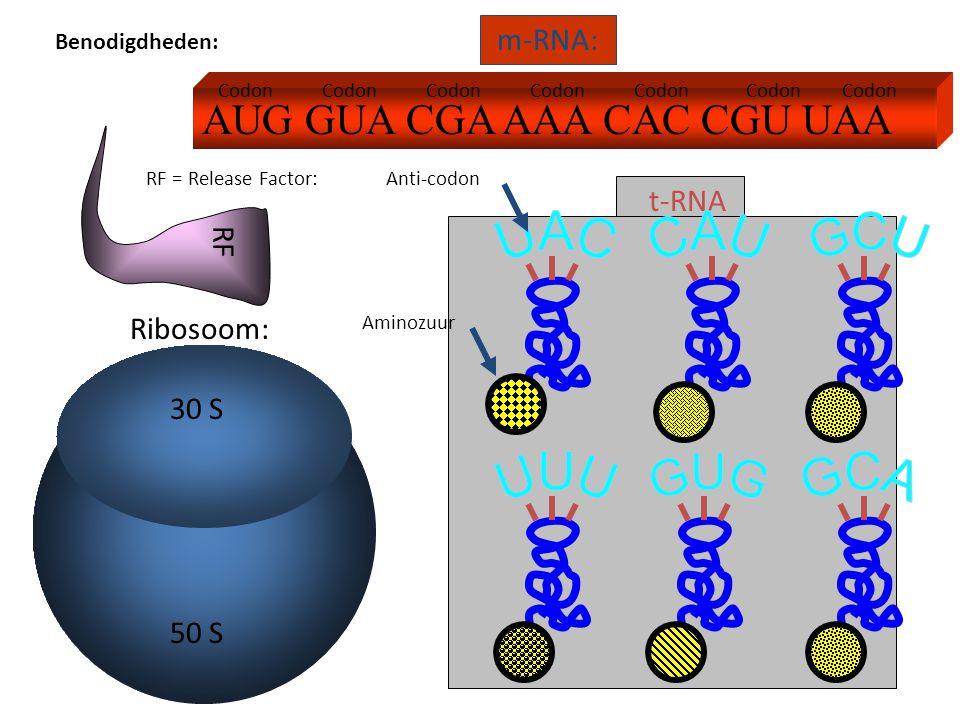 AUG GUA CGA AAA CAC CGU UAA m-RNA: Ribosoom: t-RNA RF RF = Release Factor: 30 S 50 S Anti-codon Codon Aminozuur Benodigdheden: