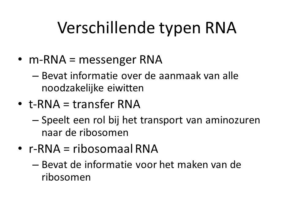 Verschillende typen RNA m-RNA = messenger RNA – Bevat informatie over de aanmaak van alle noodzakelijke eiwitten t-RNA = transfer RNA – Speelt een rol