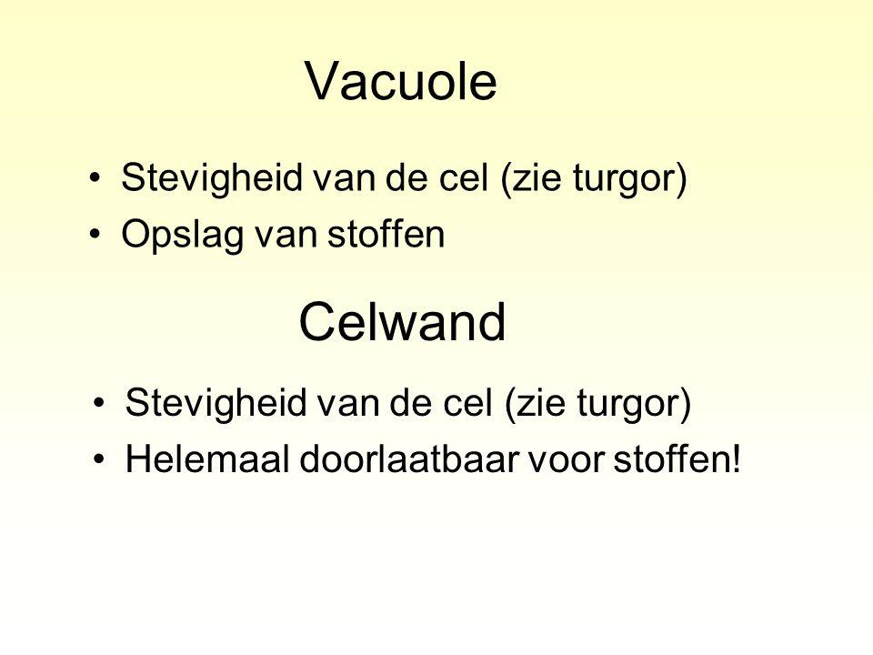 Vacuole Stevigheid van de cel (zie turgor) Opslag van stoffen Celwand Stevigheid van de cel (zie turgor) Helemaal doorlaatbaar voor stoffen!