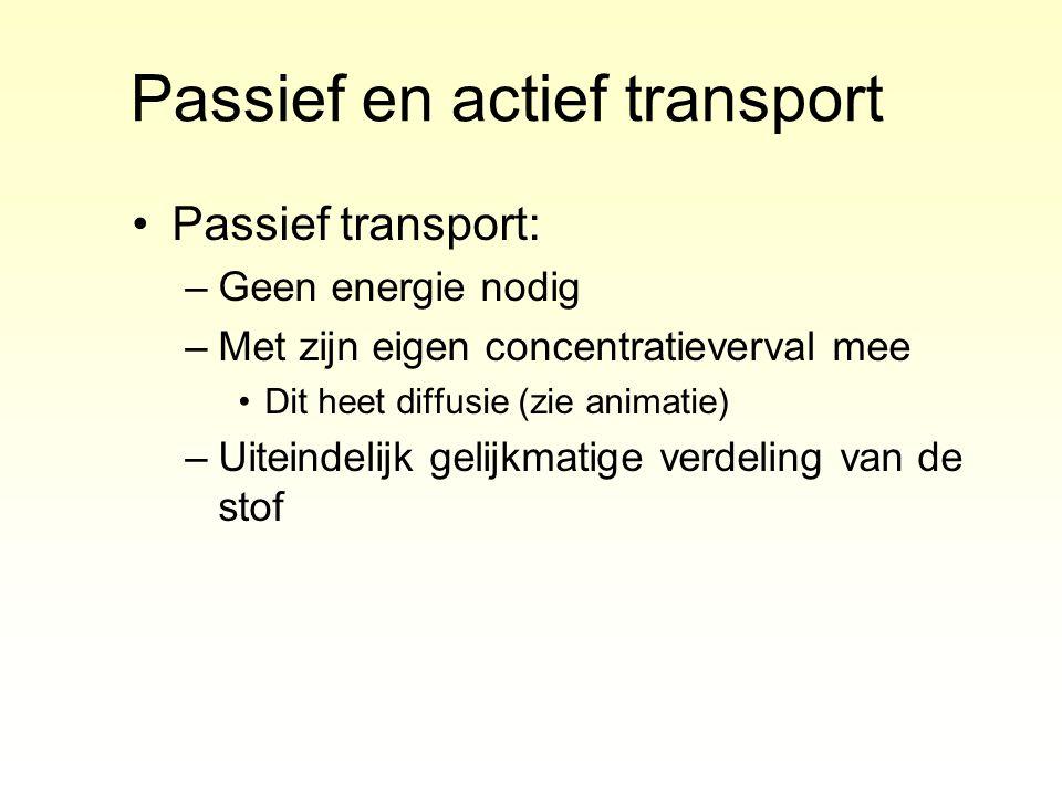 Passief en actief transport Passief transport: –Geen energie nodig –Met zijn eigen concentratieverval mee Dit heet diffusie (zie animatie) –Uiteindeli