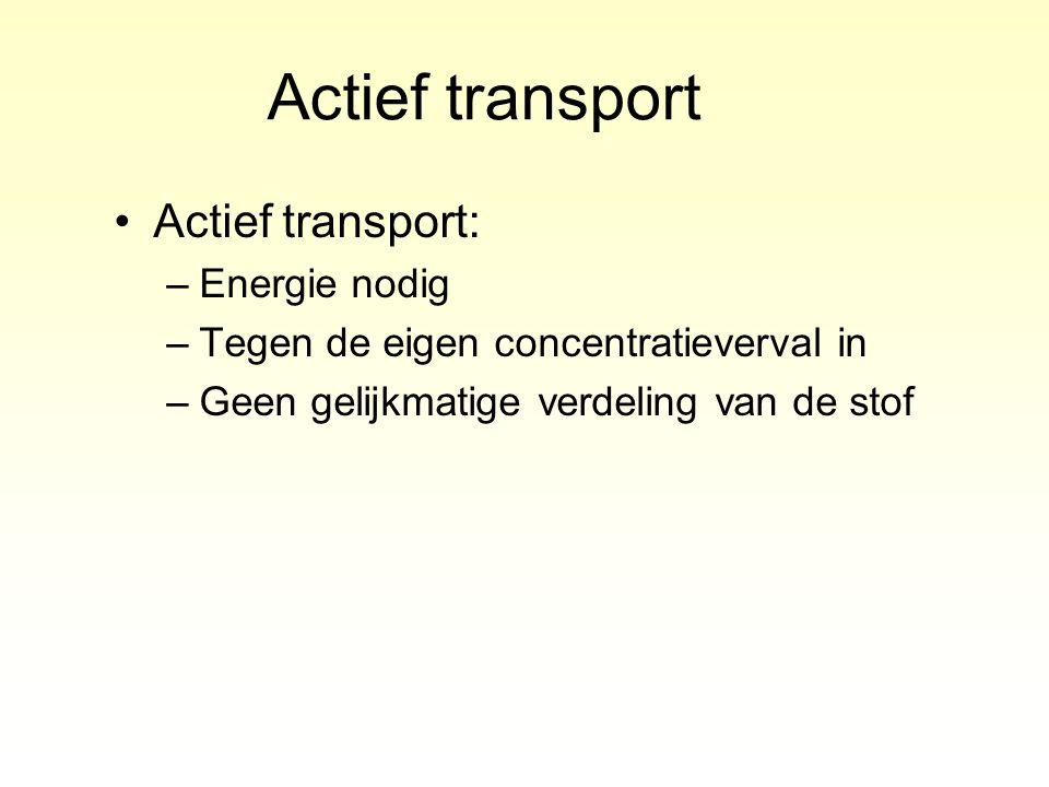 Actief transport Actief transport: –Energie nodig –Tegen de eigen concentratieverval in –Geen gelijkmatige verdeling van de stof