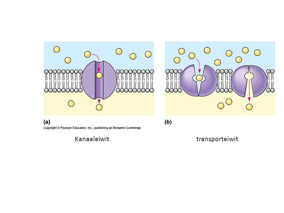 Diffusie (passief transport) Uiteindelijk een gelijkmatige verdeling van een stof als gevolg van willekeurige bewegingen van moleculen (bij vloeistoffen en gassen)