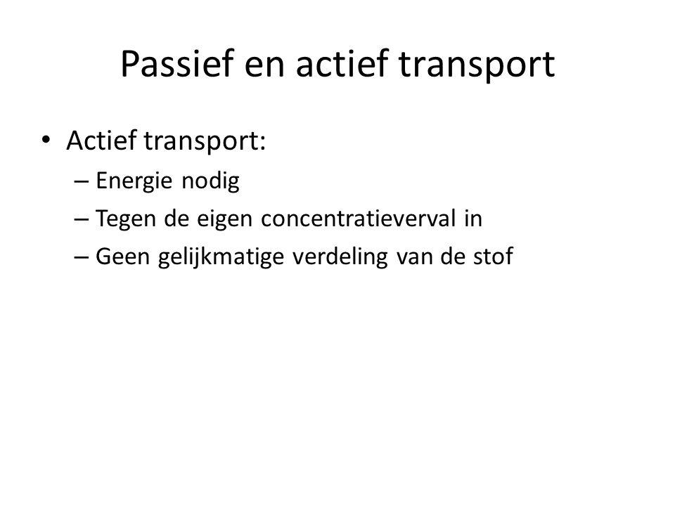 Passief en actief transport Actief transport: – Energie nodig – Tegen de eigen concentratieverval in – Geen gelijkmatige verdeling van de stof