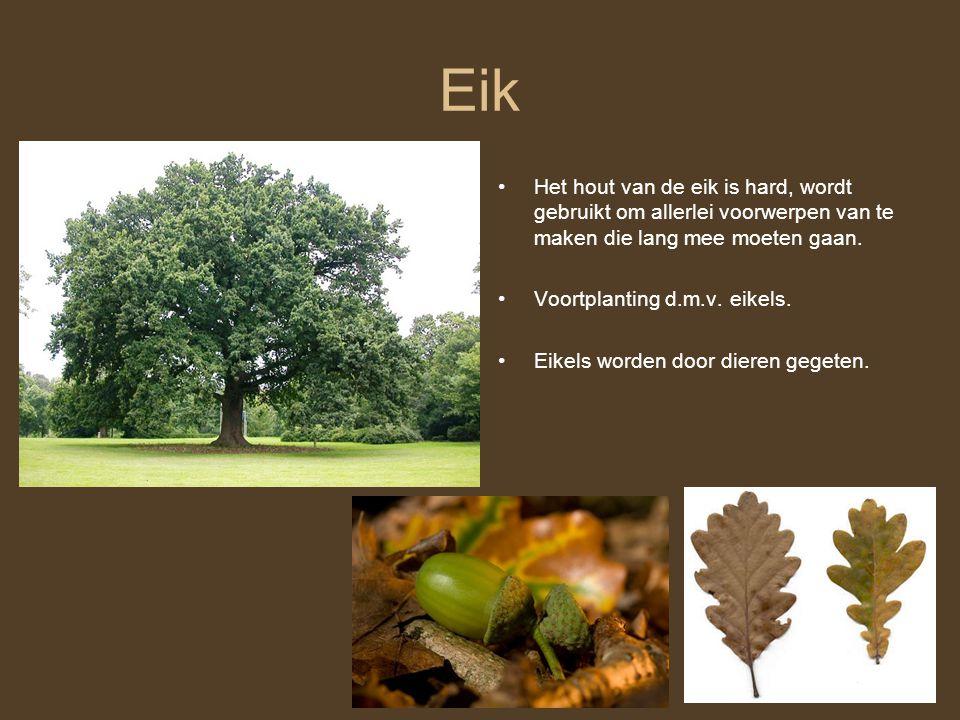 Eik Het hout van de eik is hard, wordt gebruikt om allerlei voorwerpen van te maken die lang mee moeten gaan. Voortplanting d.m.v. eikels. Eikels word
