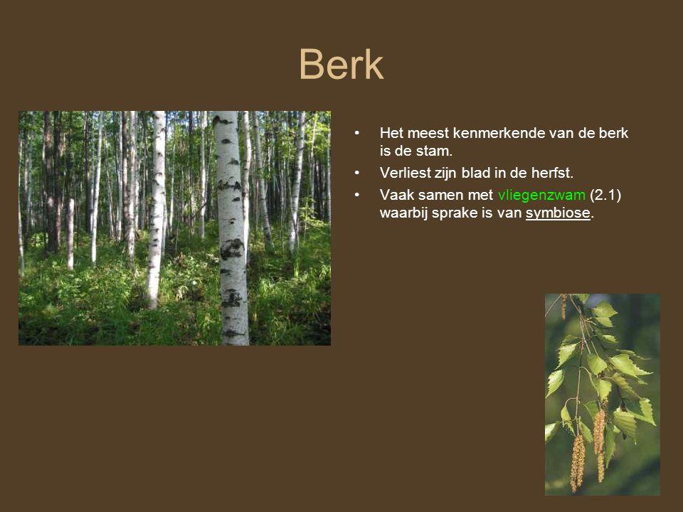 Berk Het meest kenmerkende van de berk is de stam. Verliest zijn blad in de herfst. Vaak samen met vliegenzwam (2.1) waarbij sprake is van symbiose.