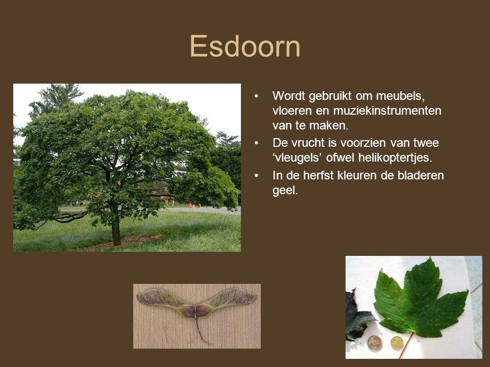 Esdoorn Wordt gebruikt om meubels, vloeren en muziekinstrumenten van te maken. De vrucht is voorzien van twee 'vleugels' ofwel helikoptertjes. In de h