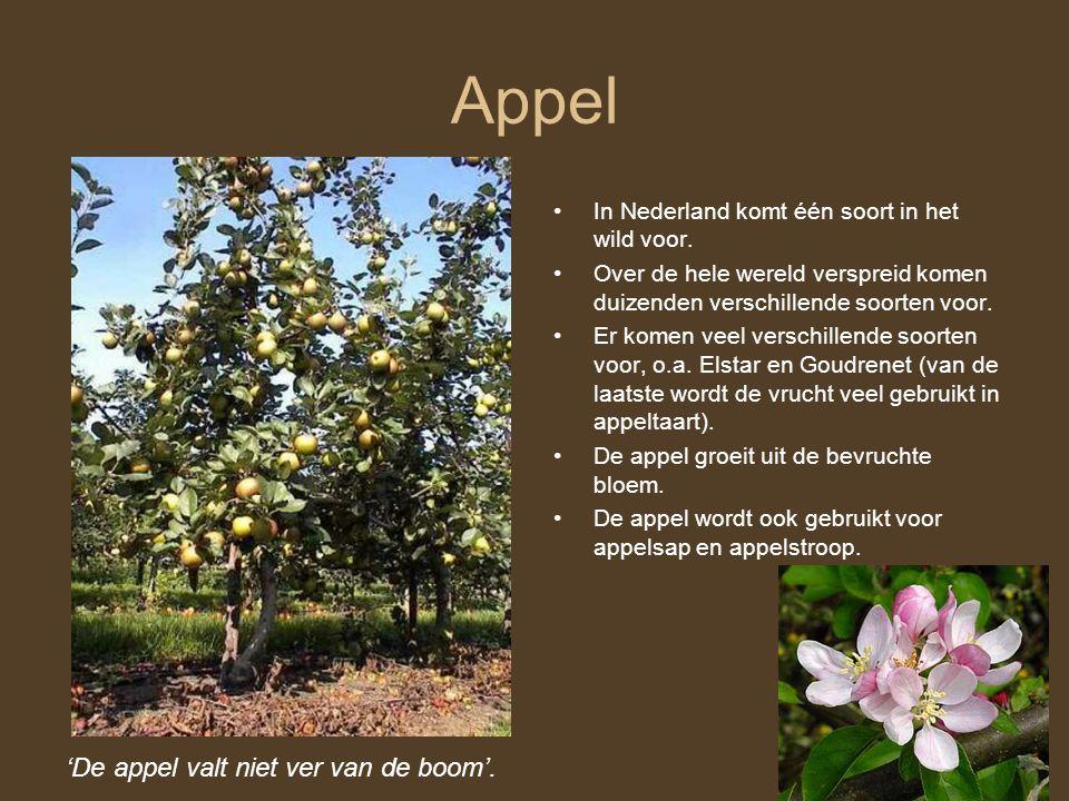 Appel 'De appel valt niet ver van de boom'. In Nederland komt één soort in het wild voor. Over de hele wereld verspreid komen duizenden verschillende