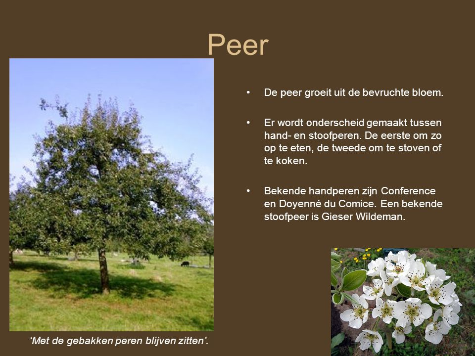 Peer 'Met de gebakken peren blijven zitten'. De peer groeit uit de bevruchte bloem. Er wordt onderscheid gemaakt tussen hand- en stoofperen. De eerste