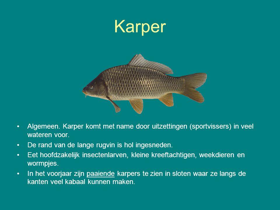 Karper Algemeen. Karper komt met name door uitzettingen (sportvissers) in veel wateren voor. De rand van de lange rugvin is hol ingesneden. Eet hoofdz