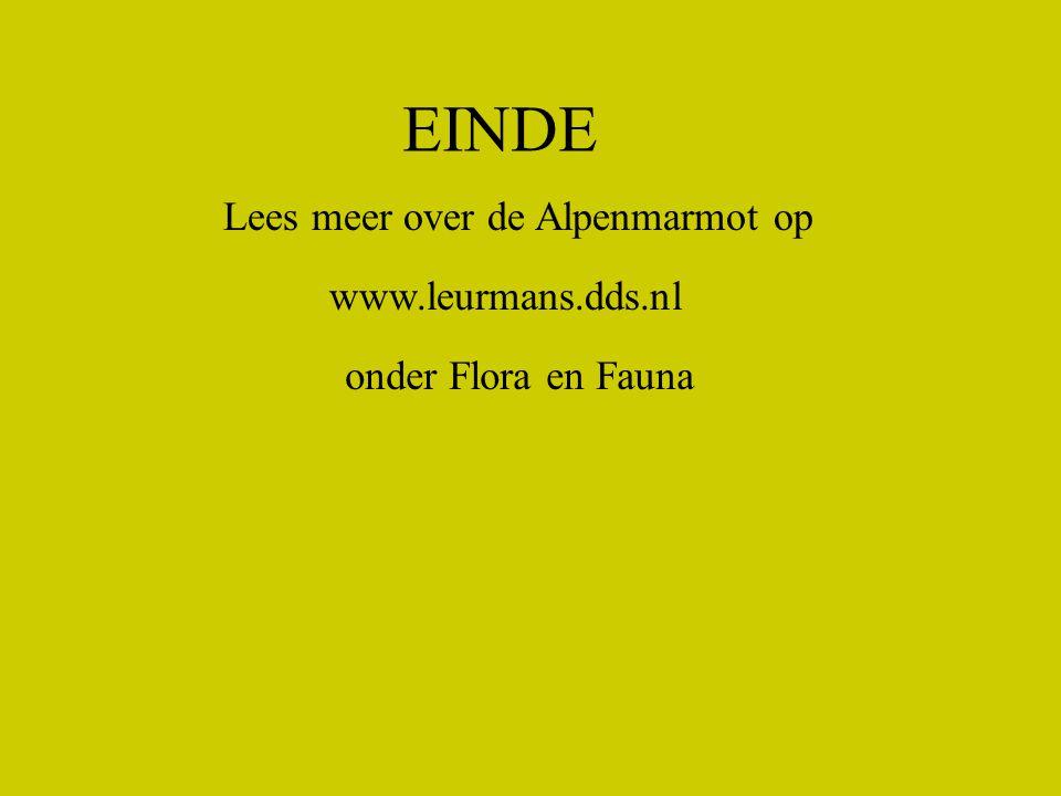 EINDE Lees meer over de Alpenmarmot op www.leurmans.dds.nl onder Flora en Fauna