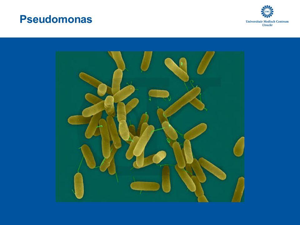 Oppikken van Pseudomononas 20 kinderen met CF 20 gezonde kinderen