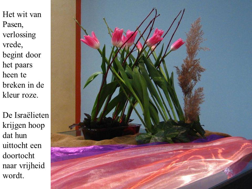 Het wit van Pasen, verlossing vrede, begint door het paars heen te breken in de kleur roze. De Israëlieten krijgen hoop dat hun uittocht een doortocht