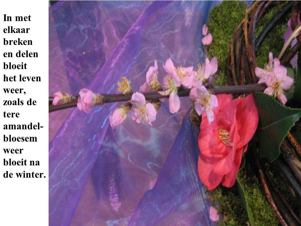 eeneen In met elkaar breken en delen bloeit het leven weer, zoals de tere amandel- bloesem weer bloeit na de winter.