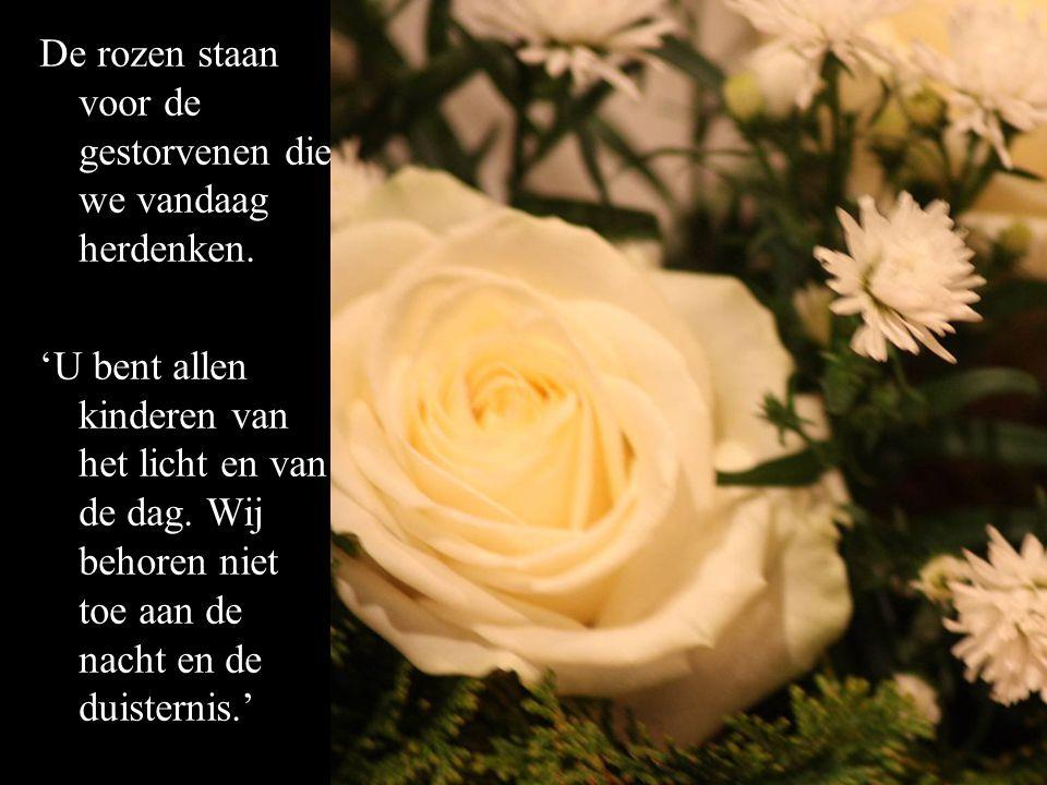 De rozen staan voor de gestorvenen die we vandaag herdenken. 'U bent allen kinderen van het licht en van de dag. Wij behoren niet toe aan de nacht en