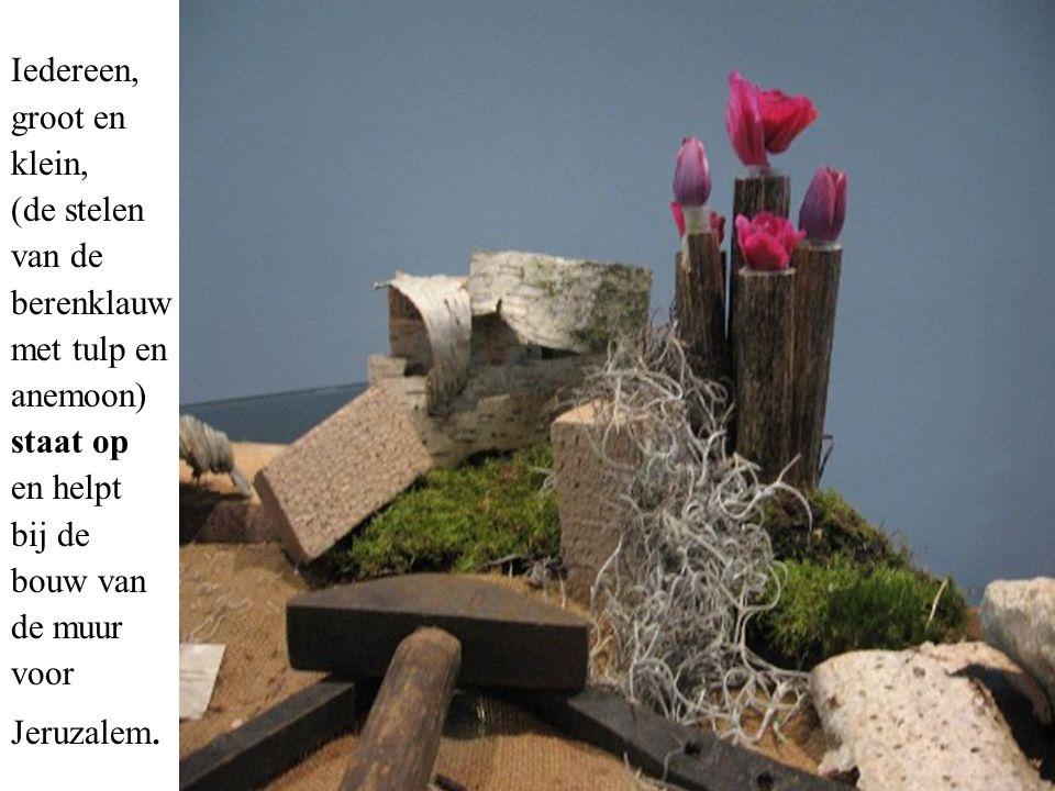 Iedereen, groot en klein, (de stelen van de berenklauw met tulp en anemoon) staat op en helpt bij de bouw van de muur voor Jeruzalem.