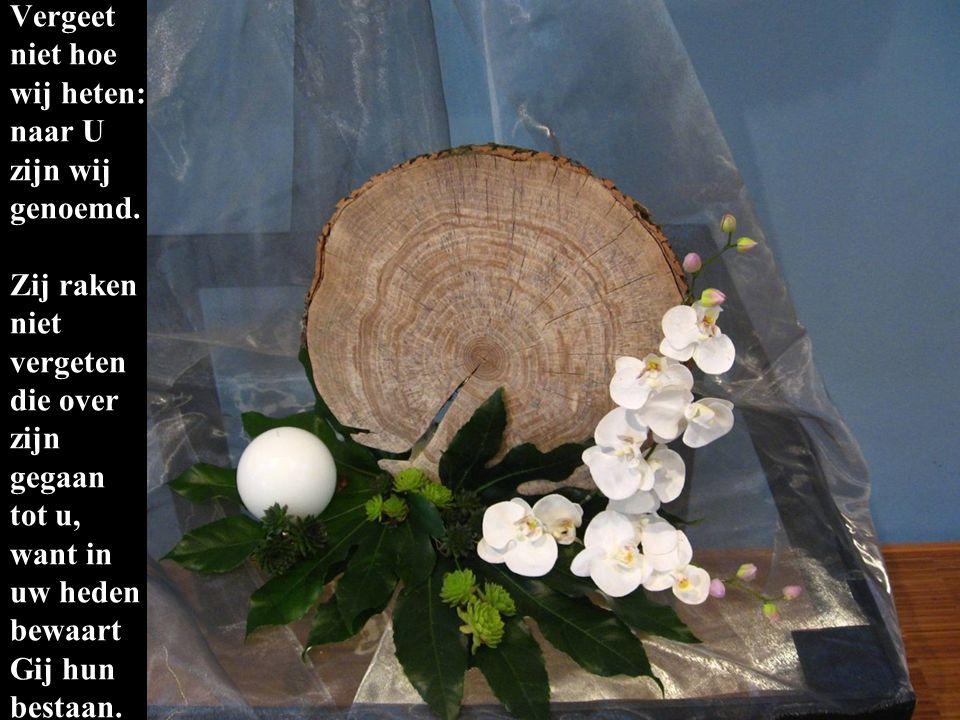 De jaarringen in de boomschijf geven de jaren aan van hen die wij gedenken, jong en oud, wiens namen wij niet vergeten.