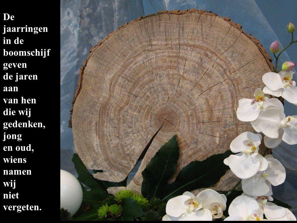 De witte phalanopsis bloemen zijn zij die wij gedenken en die gedragen worden in Gods handen.
