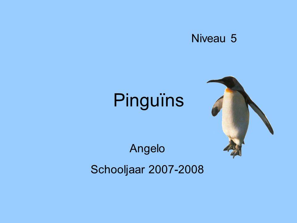 Pinguïns Niveau 5 Angelo Schooljaar 2007-2008