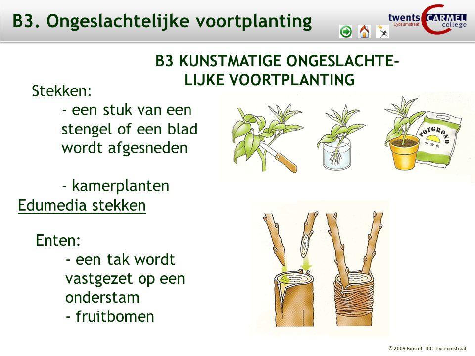 © 2009 Biosoft TCC - Lyceumstraat B3 KUNSTMATIGE ONGESLACHTE- LIJKE VOORTPLANTING Stekken: - een stuk van een stengel of een blad wordt afgesneden - kamerplanten Enten: - een tak wordt vastgezet op een onderstam - fruitbomen Edumedia stekken B3.