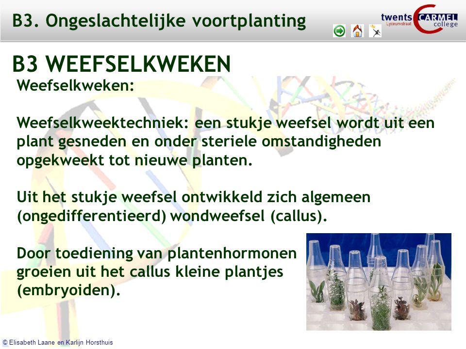 © 2009 Biosoft TCC - Lyceumstraat © Elisabeth Laane en Karlijn Horsthuis Weefselkweken: Weefselkweektechniek: een stukje weefsel wordt uit een plant gesneden en onder steriele omstandigheden opgekweekt tot nieuwe planten.