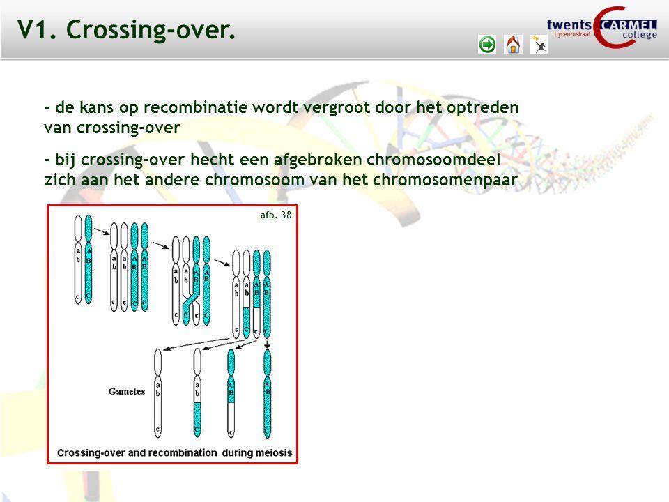 © 2009 Biosoft TCC - Lyceumstraat - de kans op recombinatie wordt vergroot door het optreden van crossing-over - bij crossing-over hecht een afgebroken chromosoomdeel zich aan het andere chromosoom van het chromosomenpaar afb.