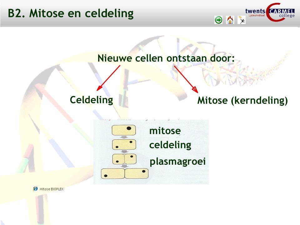 © 2009 Biosoft TCC - Lyceumstraat Nieuwe cellen ontstaan door: Mitose (kerndeling) Celdeling mitose celdeling plasmagroei B2.