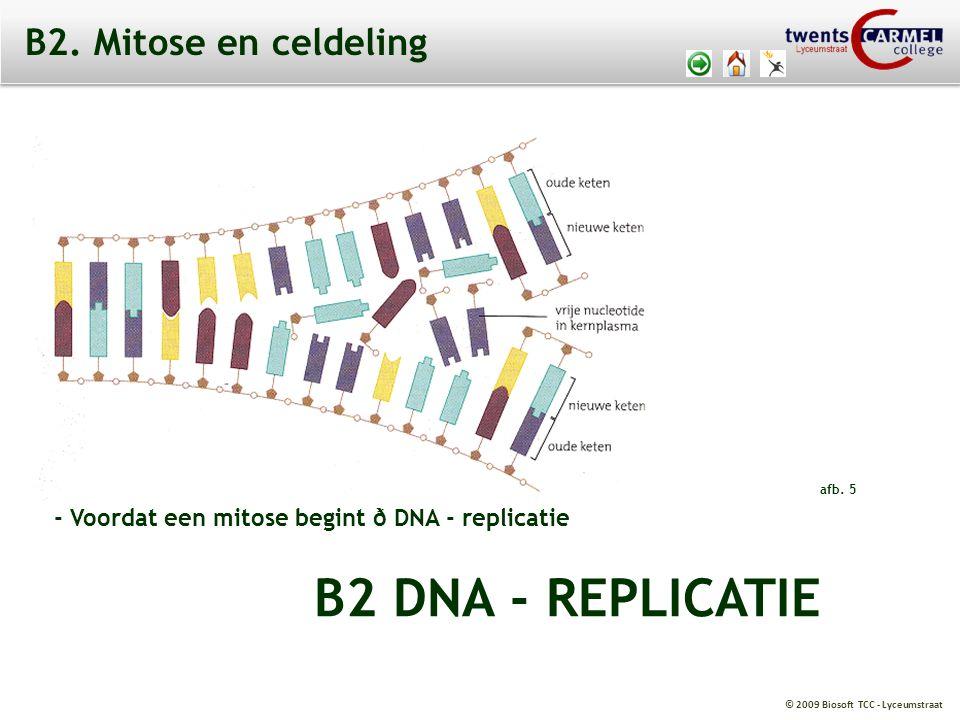 © 2009 Biosoft TCC - Lyceumstraat Meiose I (reductiedeling): - een diploïde cel wordt twee haploide cellen - 2n à n + n Meiose II (mitotische deling): - twee haploide cellen geven 4 haploide cellen - n à n + n B4.