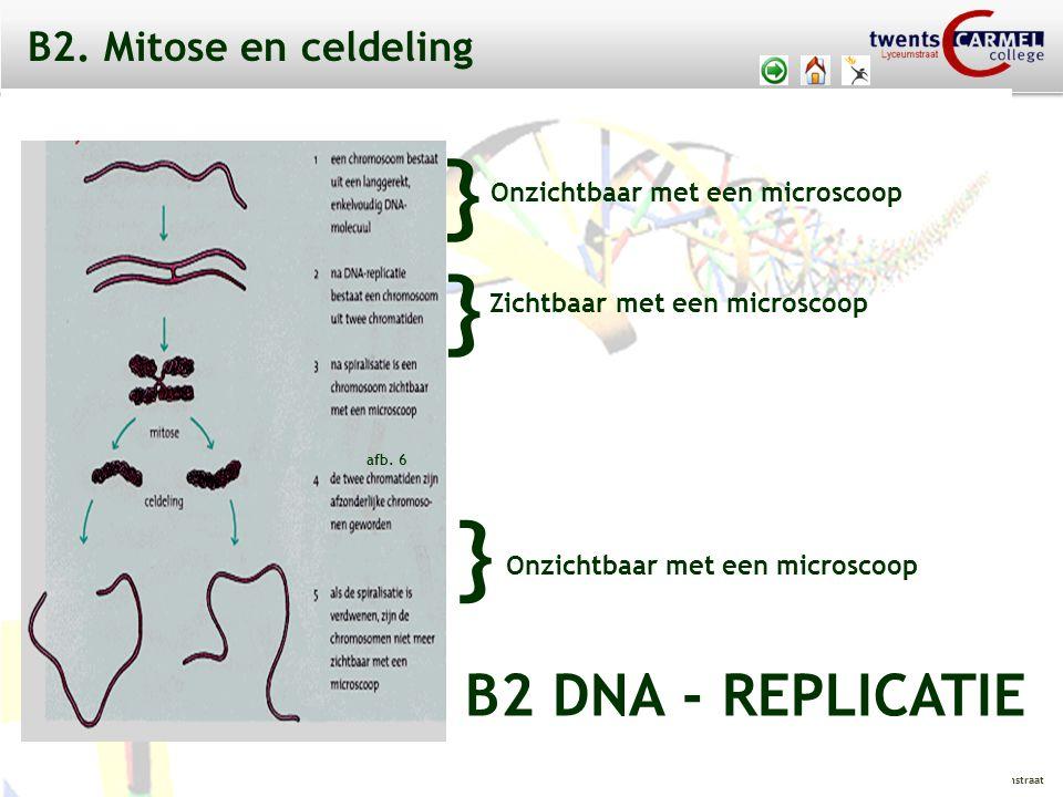 © 2009 Biosoft TCC - Lyceumstraat B2 CELCYCLUS interfase: 3 verschillende fasen: - G1 - fase - S - fase - G2 - fase celcyclus = mitose + interfase B2.