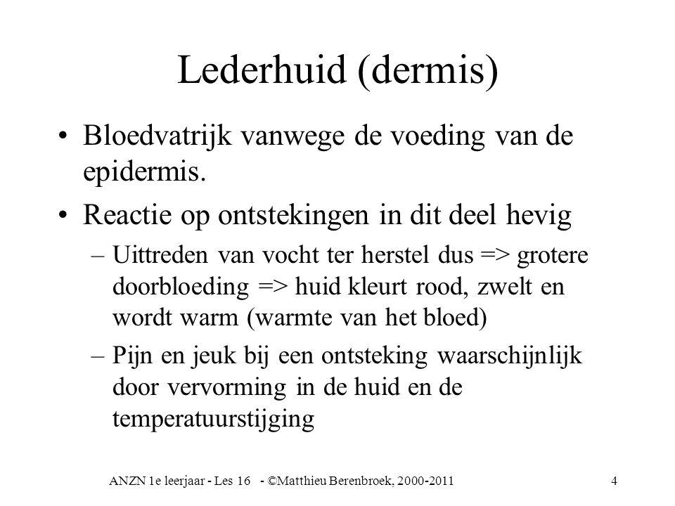 ANZN 1e leerjaar - Les 16 - ©Matthieu Berenbroek, 2000-20114 Lederhuid (dermis) Bloedvatrijk vanwege de voeding van de epidermis. Reactie op ontstekin