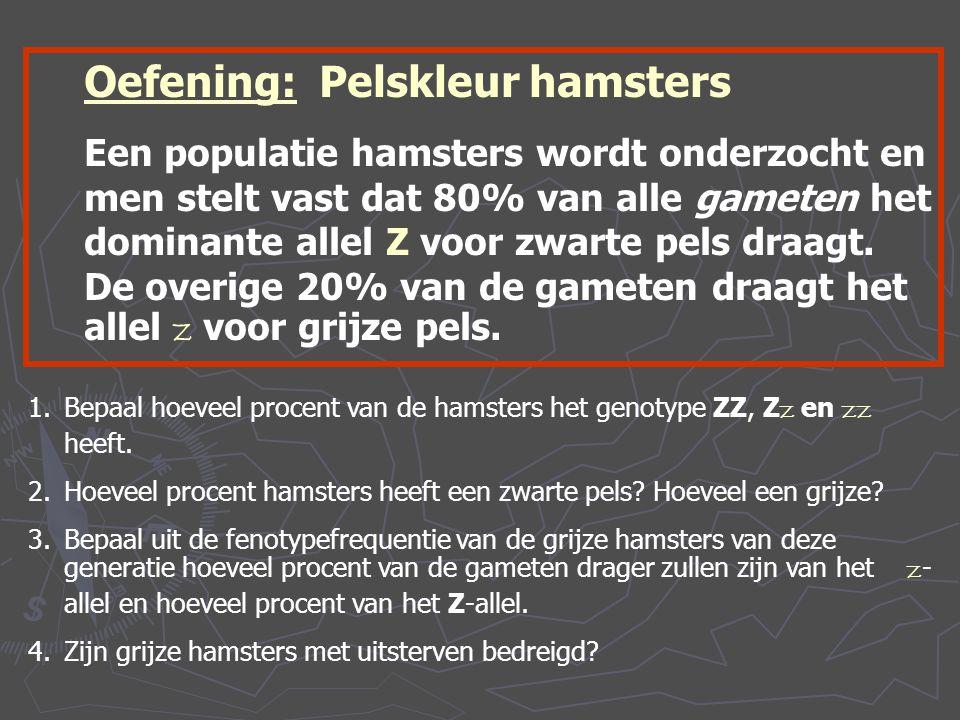 Oefening: Pelskleur hamsters Een populatie hamsters wordt onderzocht en men stelt vast dat 80% van alle gameten het dominante allel Z voor zwarte pels