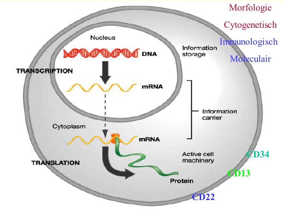 Morfologie Cytogenetisch Immunologisch Moleculair CD34 CD13 CD22