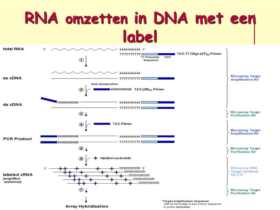 RNA omzetten in DNA met een label