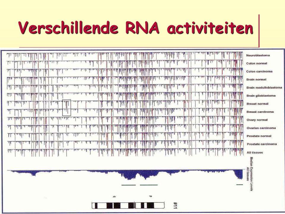 Verschillende RNA activiteiten