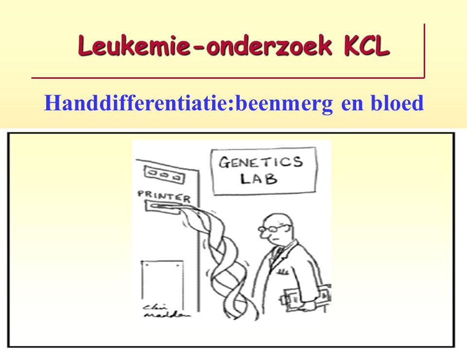 Leukemie-onderzoek KCL Handdifferentiatie:beenmerg en bloed EN