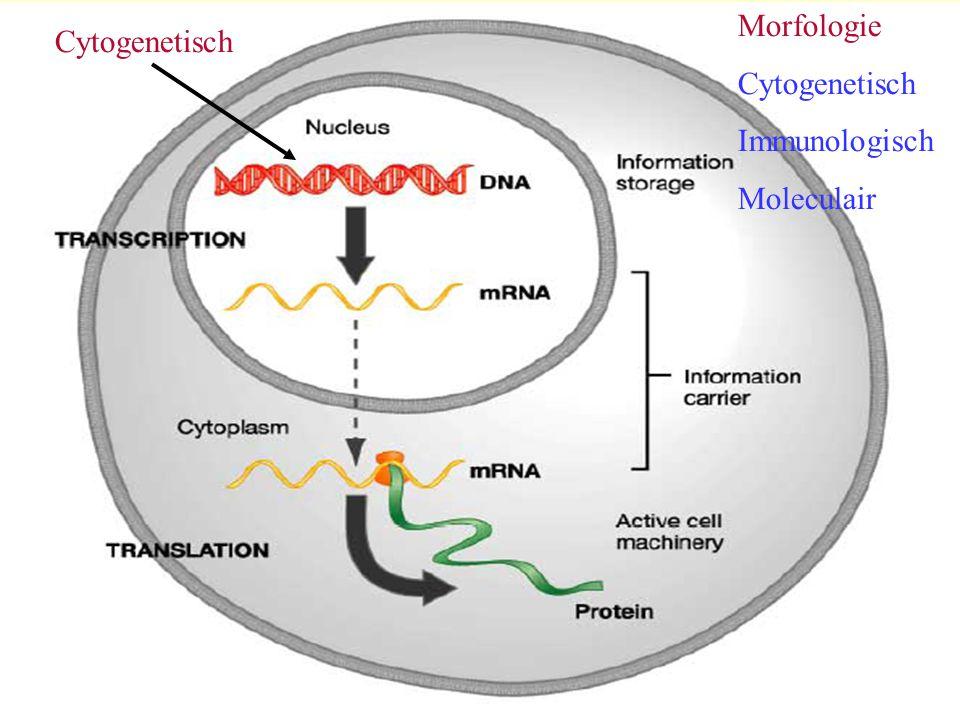 Cytogenetisch Immunologisch Moleculair Cytogenetisch