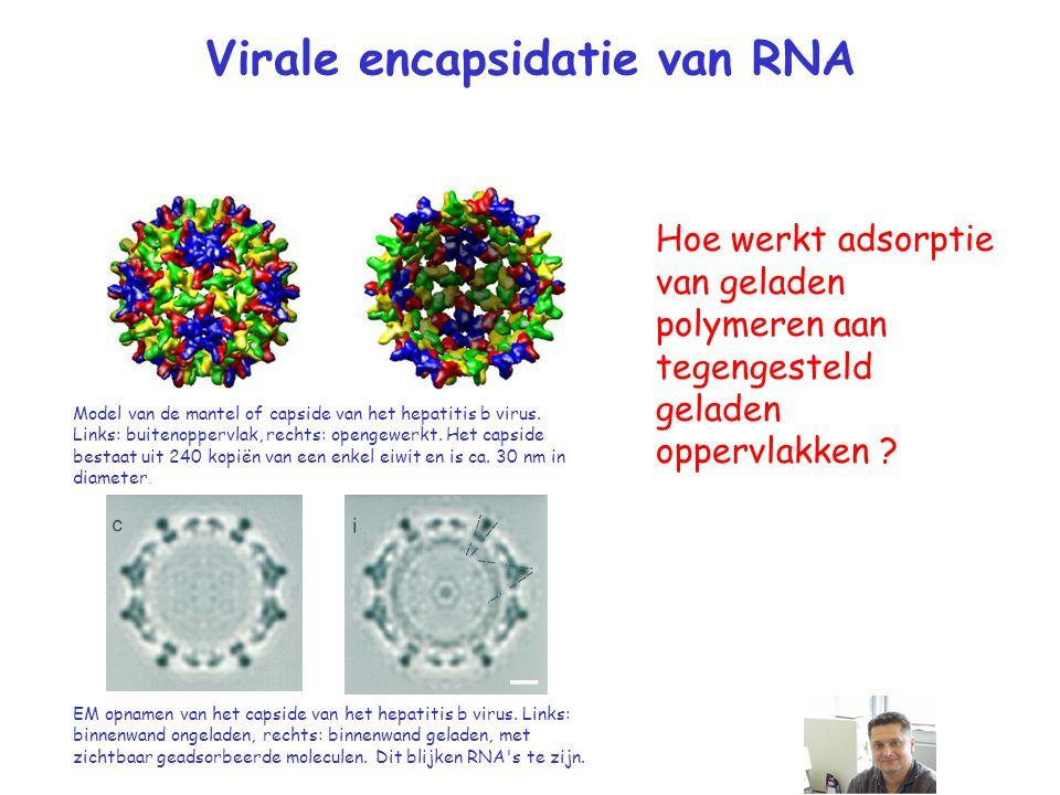 Virale encapsidatie van RNA Hoe werkt adsorptie van geladen polymeren aan tegengesteld geladen oppervlakken .