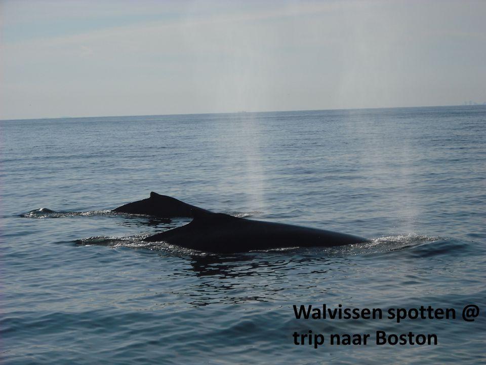 Walvissen spotten @ trip naar Boston