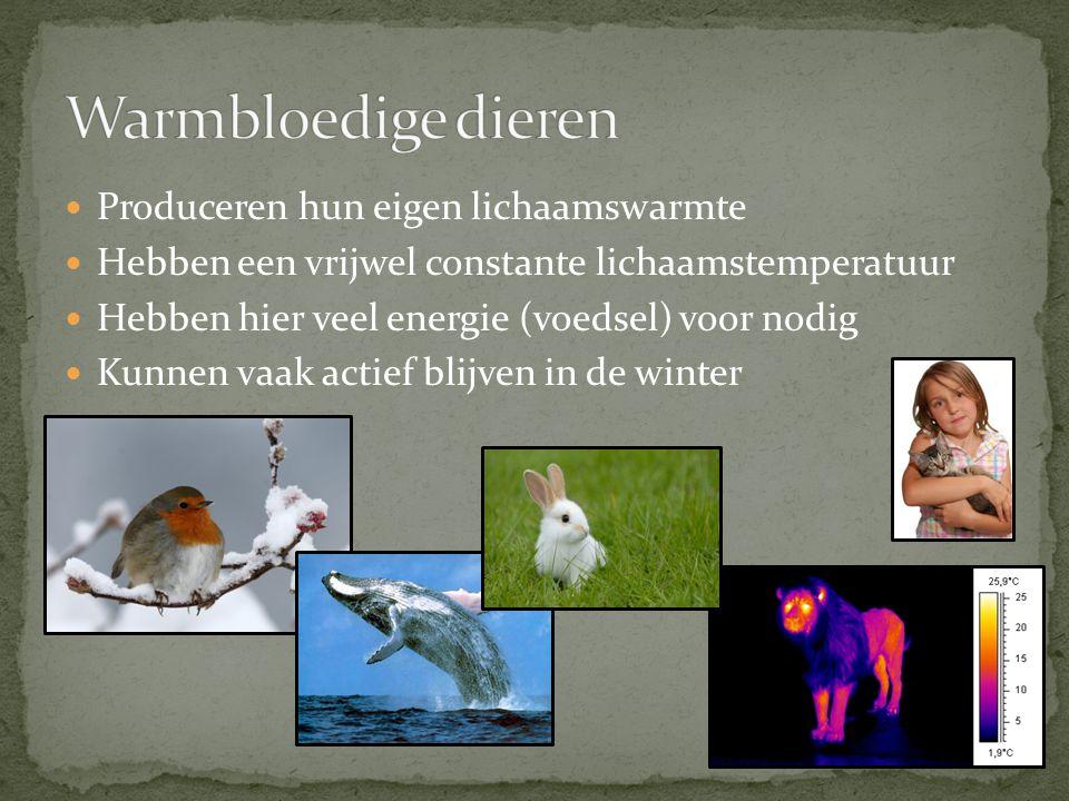 Produceren hun eigen lichaamswarmte Hebben een vrijwel constante lichaamstemperatuur Hebben hier veel energie (voedsel) voor nodig Kunnen vaak actief blijven in de winter
