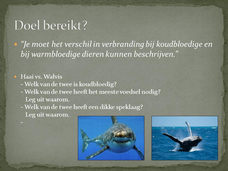 """""""Je moet het verschil in verbranding bij koudbloedige en bij warmbloedige dieren kunnen beschrijven."""" Haai vs. Walvis - Welk van de twee is koudbloedi"""