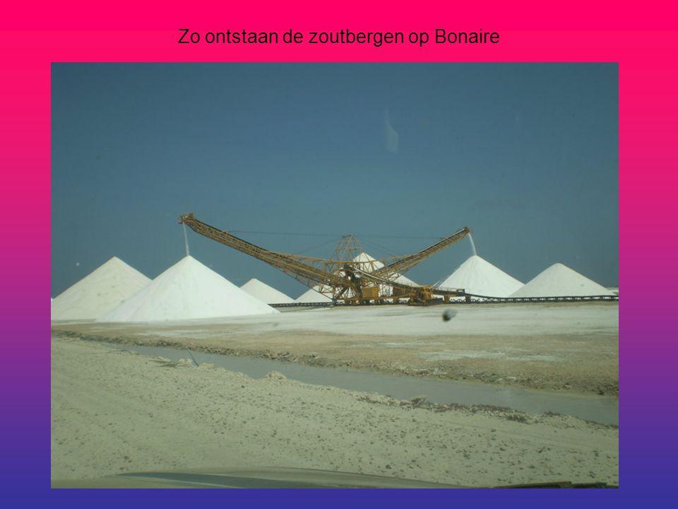 Zo ontstaan de zoutbergen op Bonaire