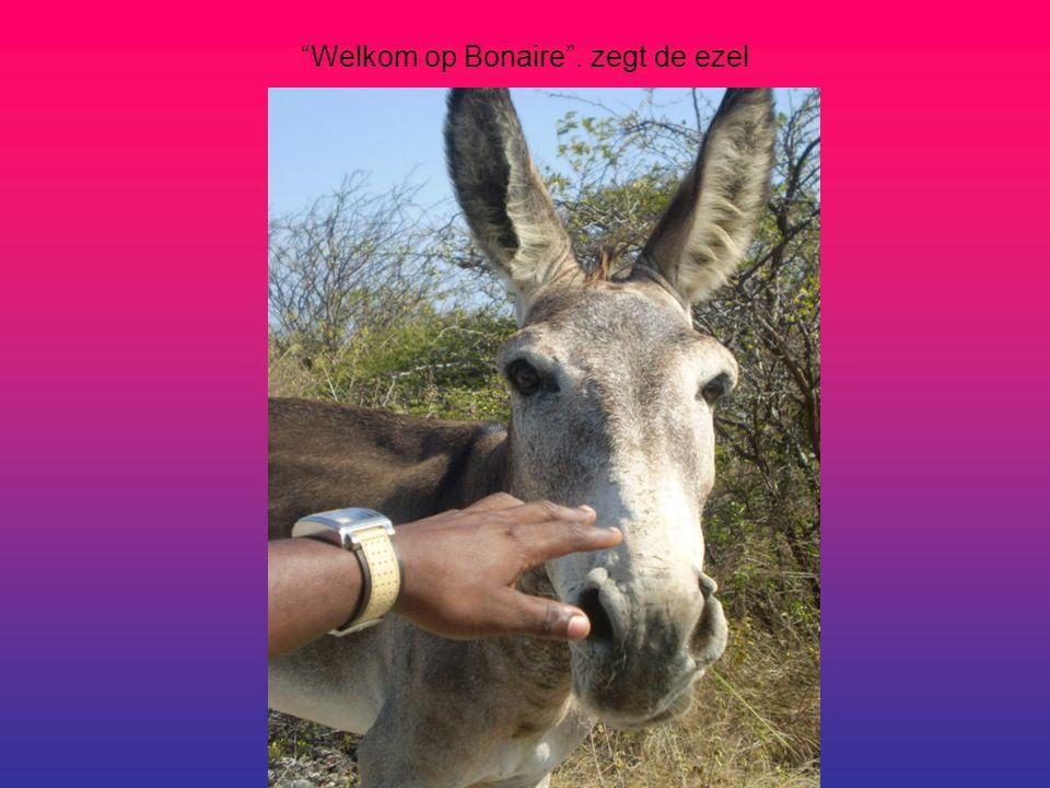 Welkom op Bonaire . zegt de ezel